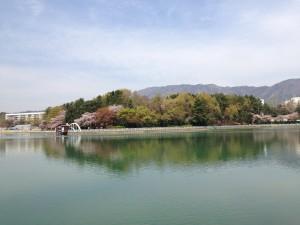 용지호수, 4월, 벚꽃, 창원
